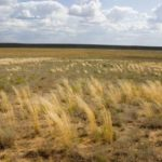 Переходные природные зоны россии 4 класс