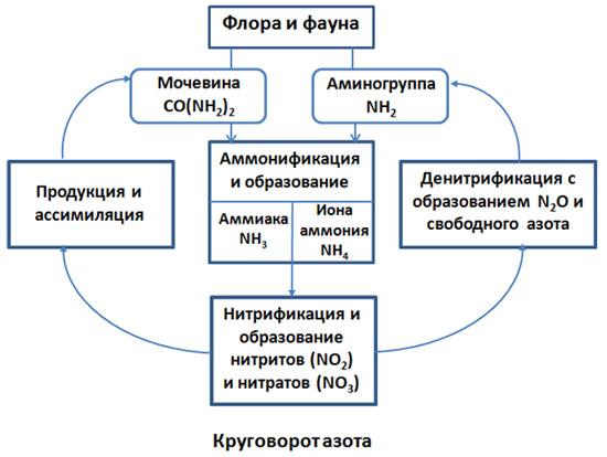 Какие связи обеспечивают круговорот веществ 3 класс