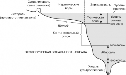 Водная экосистема